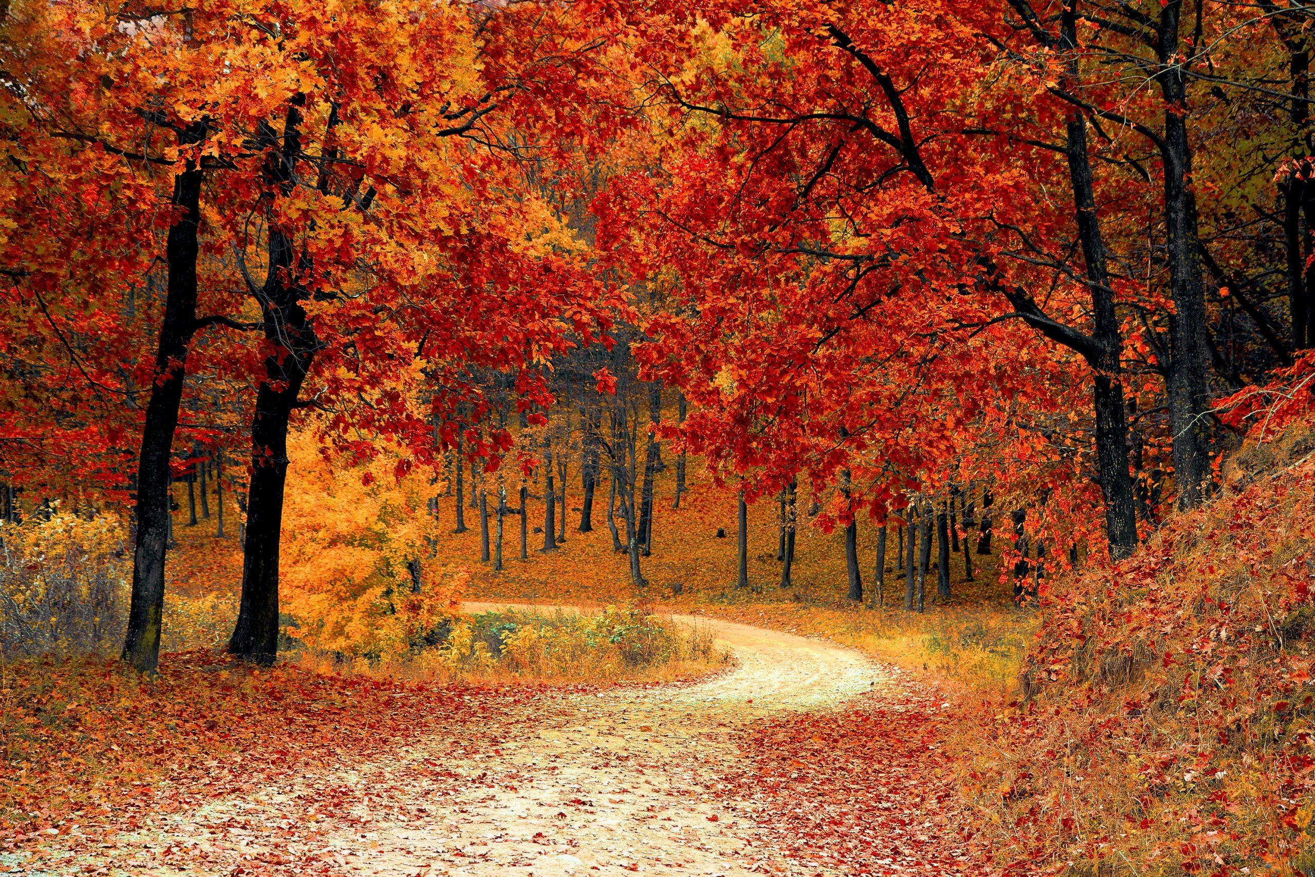 Mindfulness Blog: Part 4