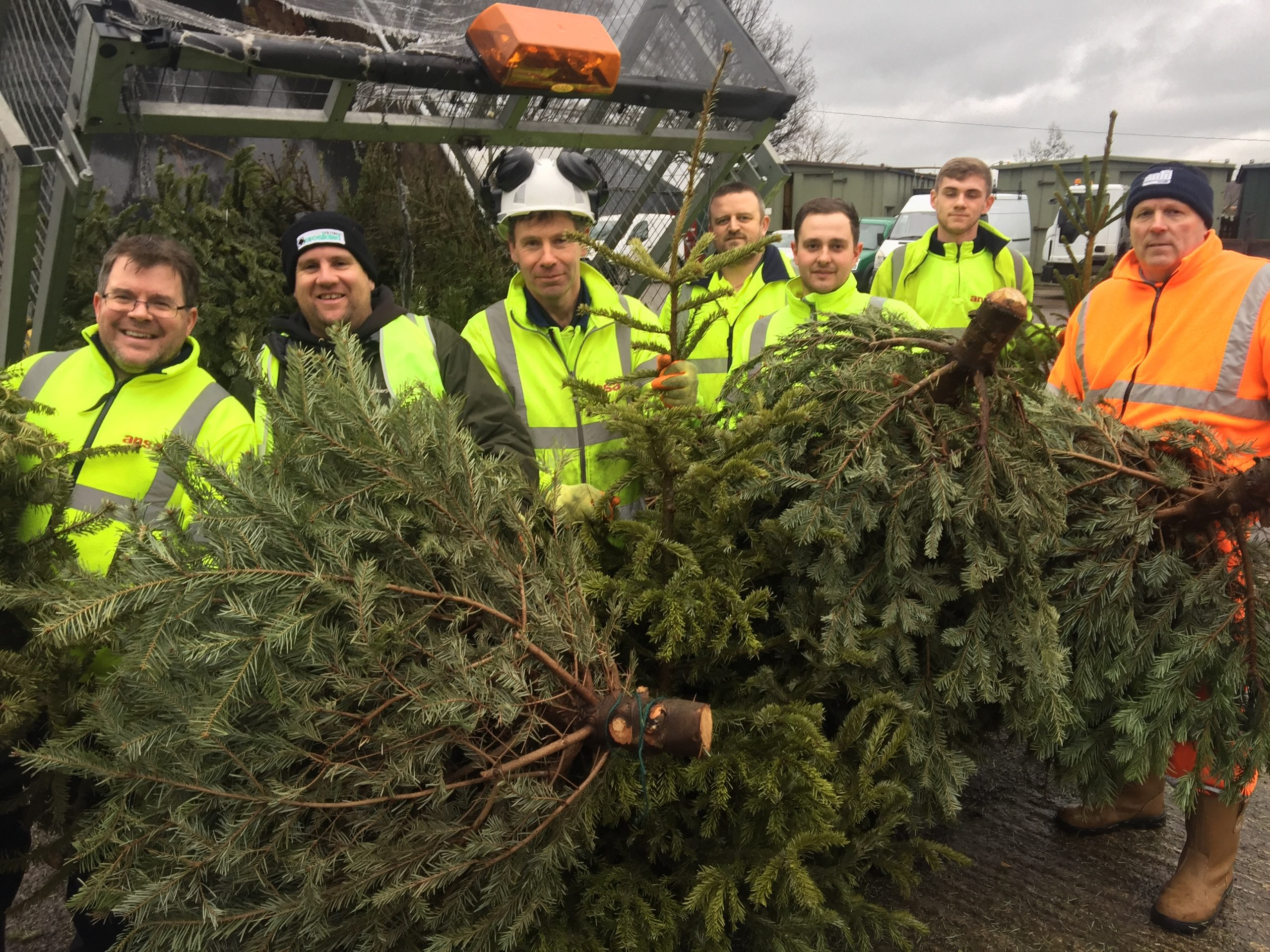 Christmas Tree Collection Hopes For A Bumper year