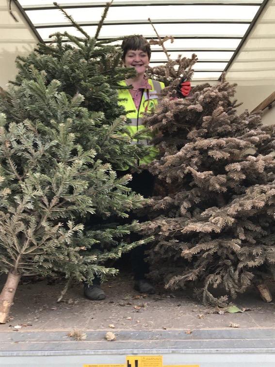 2021 Christmas Tree Collection Total