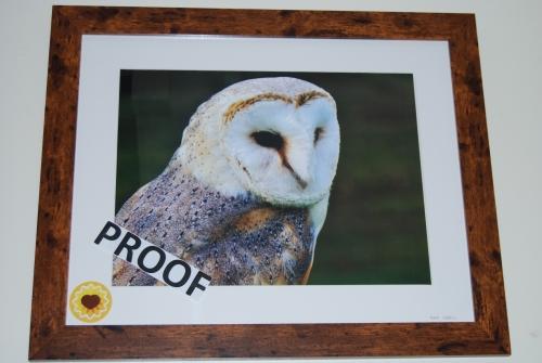 Barney-The-Owl